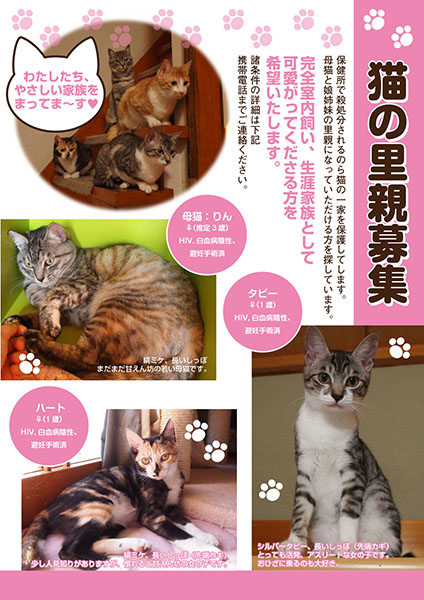 SAKURA CATS1