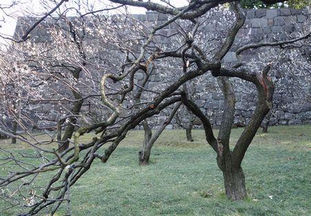 大雪で枝が折れていた
