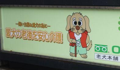 老犬の介護