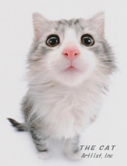 the cat 0002