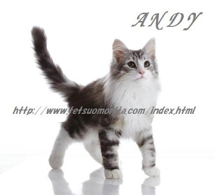 andy20130128.jpg