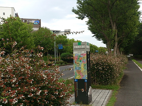 DSC_0838.jpg