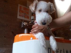 子犬ワルツ風呂2加工
