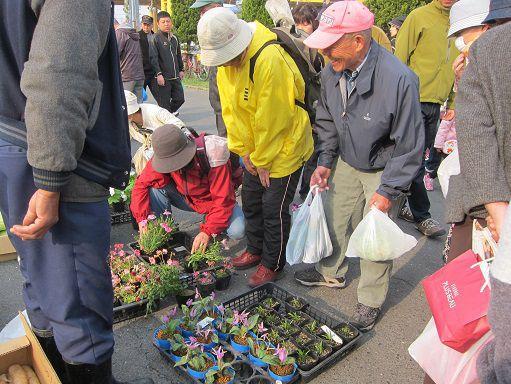 八戸朝市 春の花