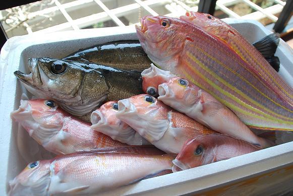 201449 魚