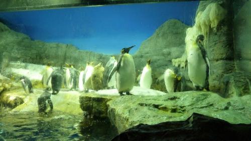 キングペンギン1