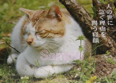 Neko_senryu201405_01