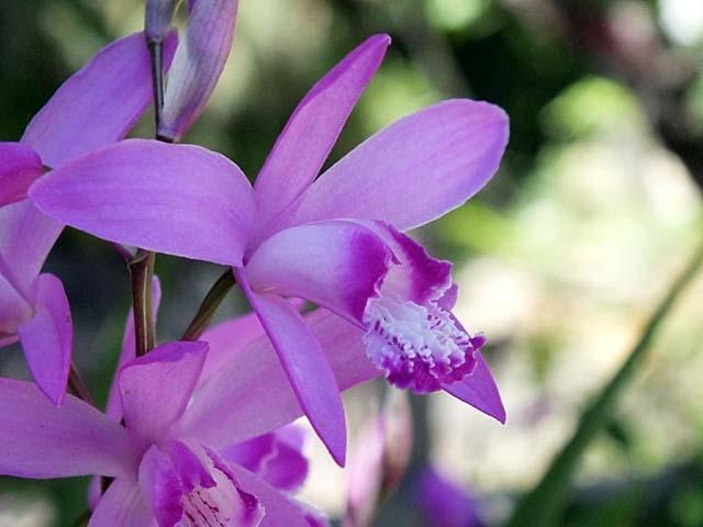 紫蘭(しらん)(39157 byte)