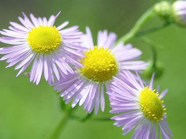 春紫苑(はるじおん)(40316 byte)