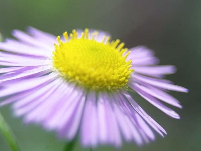 春紫苑(はるじおん)(28424 byte)