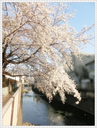 お花見2014b