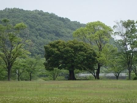 10JUN14 WAKAMIYA 002