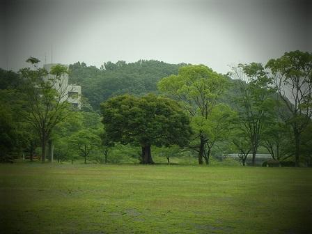 2014-06-10 10JUN14 WAKAMIYA 018