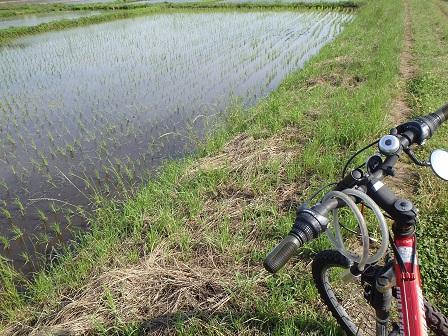 Rice Field 2014-06-19 001 004