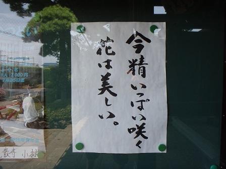Flower 2014-06-19 001 004