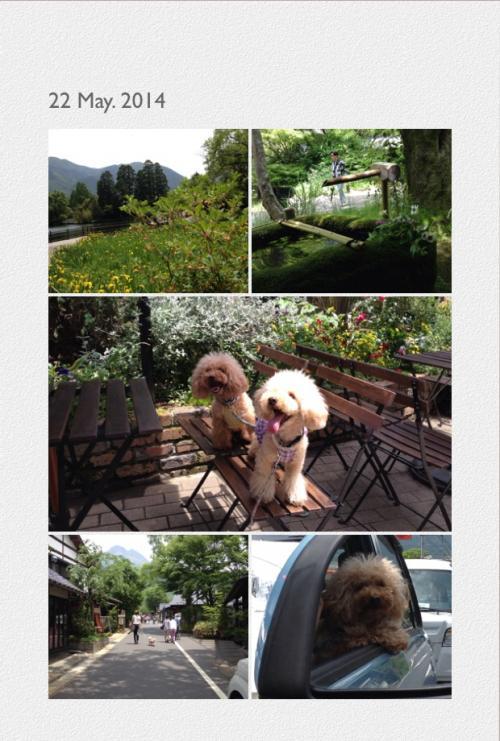 写真+湯布院みのりと2_convert_20140524215644