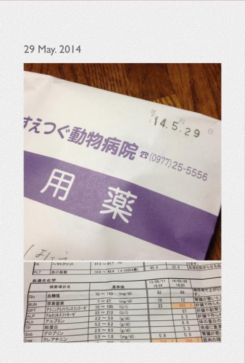 写真すえつぐ_convert_20140613224041