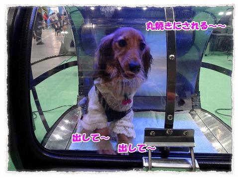 2014_3_10_4.jpg