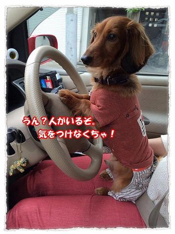 2014_5_30_2.jpg