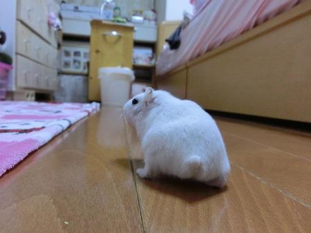 おちり&ちっぽ32