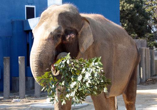 象 (4)