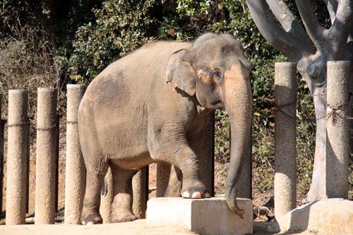 象 (1)