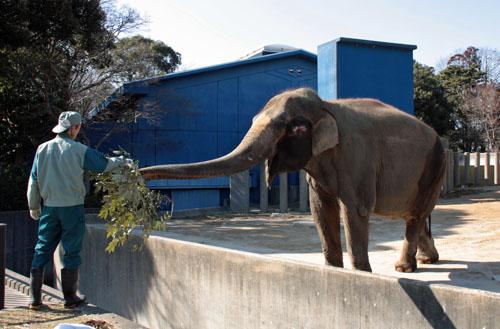 象 (3)