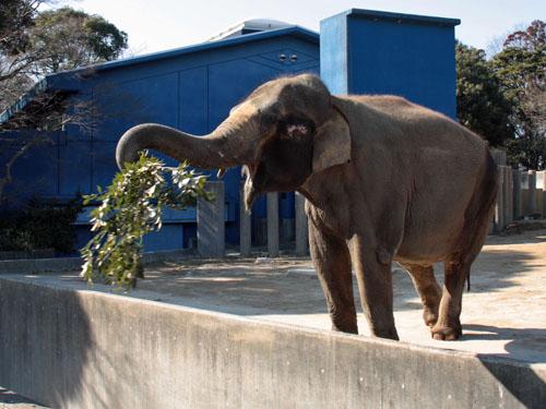 象 (5)