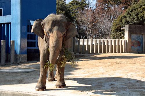 象 (6)
