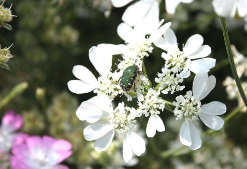 草笛の丘 虫たち (2)