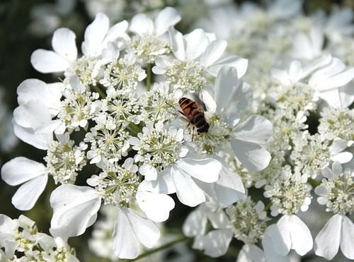草笛の丘 虫たち (3)