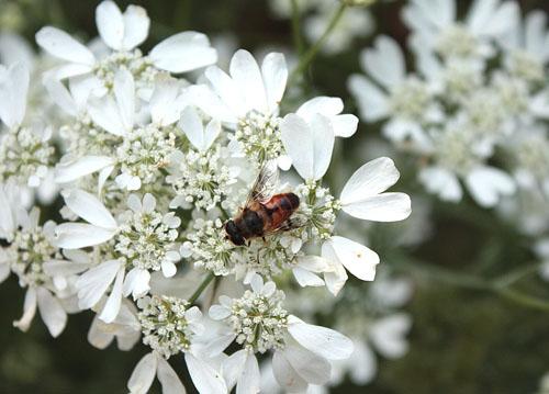 草笛の丘 虫たち (5)