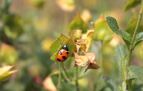 草笛の丘 虫たち (7)