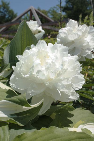 イコロの森 花 (11)