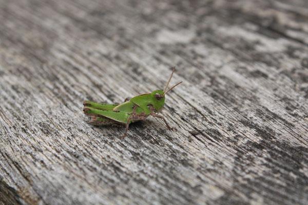 虫 (2)