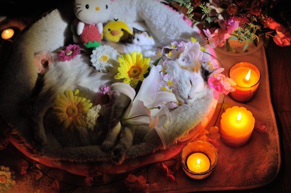 天国へ旅立ったメリーちゃん18ブログ