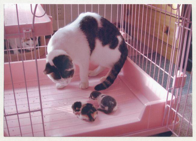 赤ちゃん誕生08ブログ