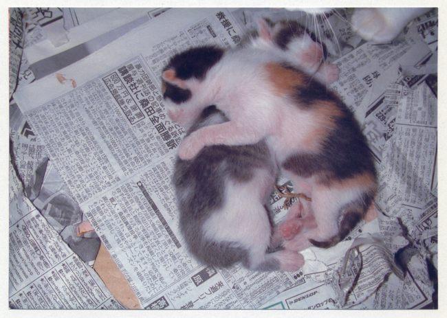赤ちゃん誕生09ブログ