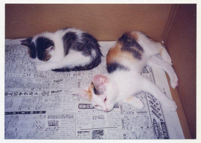 子猫時代08ブログ