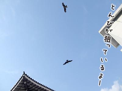 140415_27.jpg
