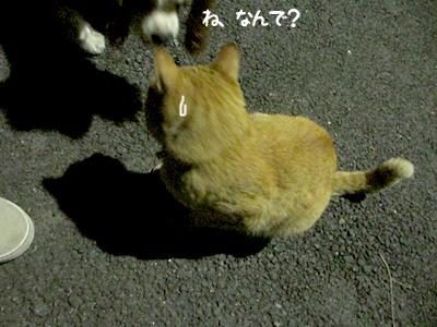 140822_11.jpg