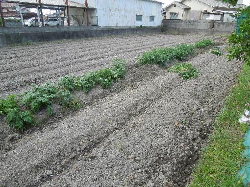 1.ジャガイモ畑