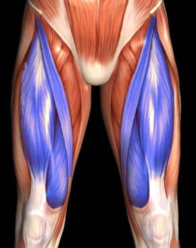 quadriceps-cropped.jpg