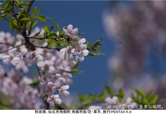 s-2-06_201405112126595c8.jpg