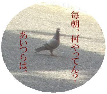 hijiki4051411.jpg