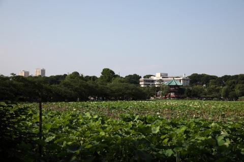 shionbazunoike.jpg