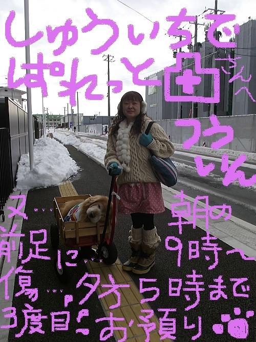 2014年2月ぱれっとさんへ通院行き①