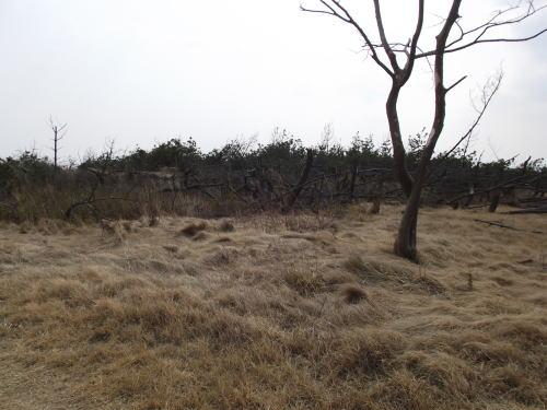 2014年3月16日(日)荒浜にて②