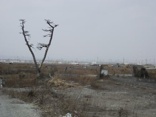 2014年3月16日(日)荒浜にて③