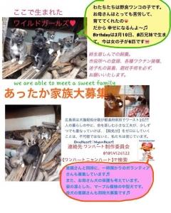 2014/3/18 子犬♀の飼主さん募集中!
